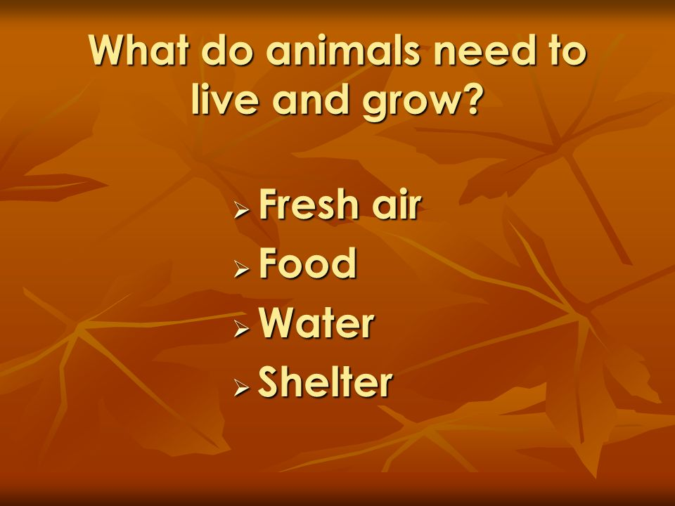 What do animals need to live and grow? Fresh air Fresh air Food Food Water Water Shelter Shelter