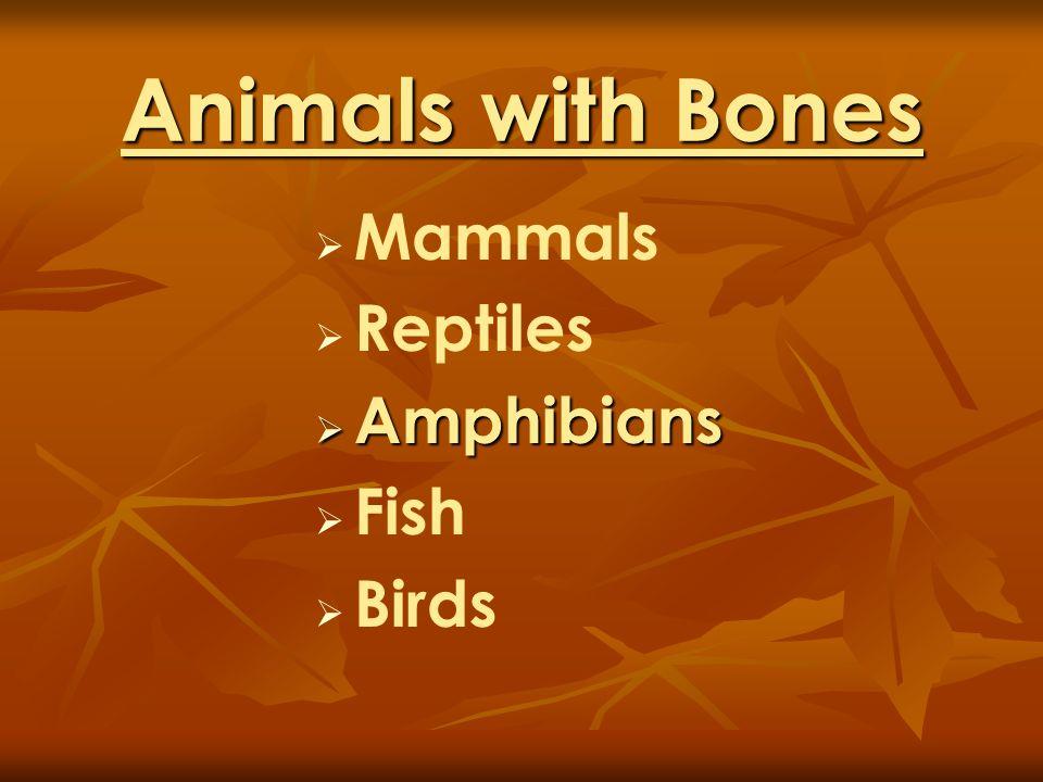 Animals with Bones Mammals Reptiles Amphibians Amphibians Fish Birds