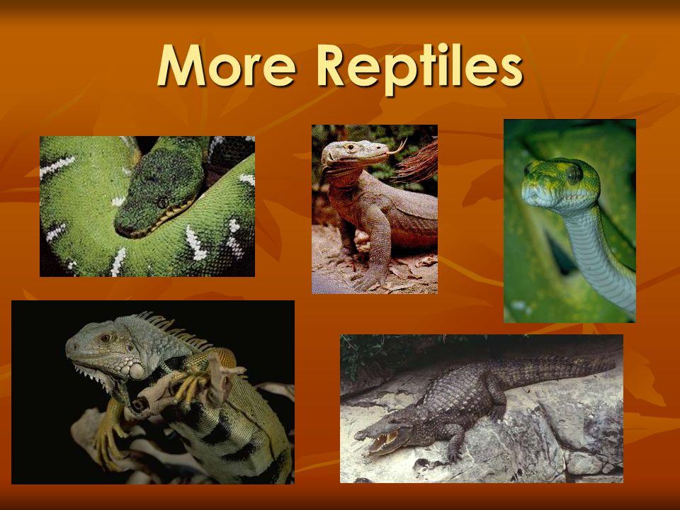 More Reptiles