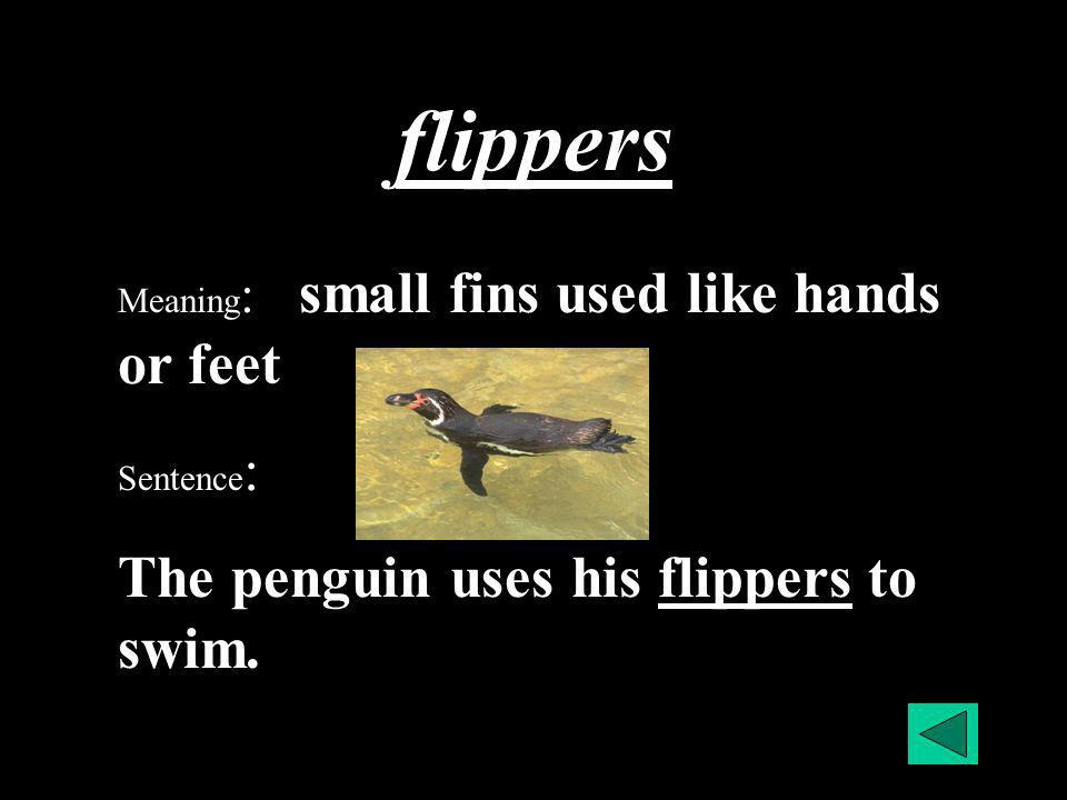 flippers Meaning : small fins used like hands or feet Sentence : The penguin uses his flippers to swim.