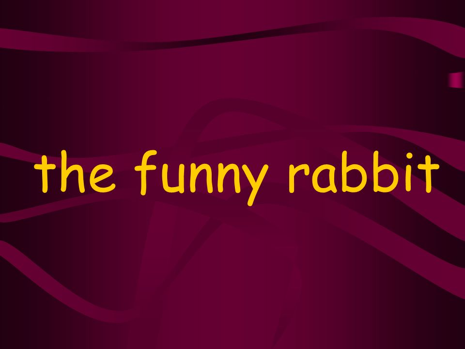the funny rabbit