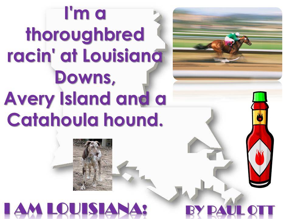 I'm a thoroughbred racin' at Louisiana Downs, Avery Island and a Catahoula hound.