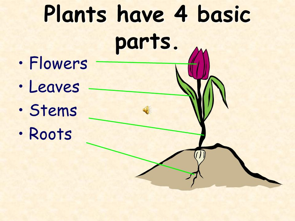 Plants need 3 basic things to live. 1.Water 3. Air 2.Sunlight