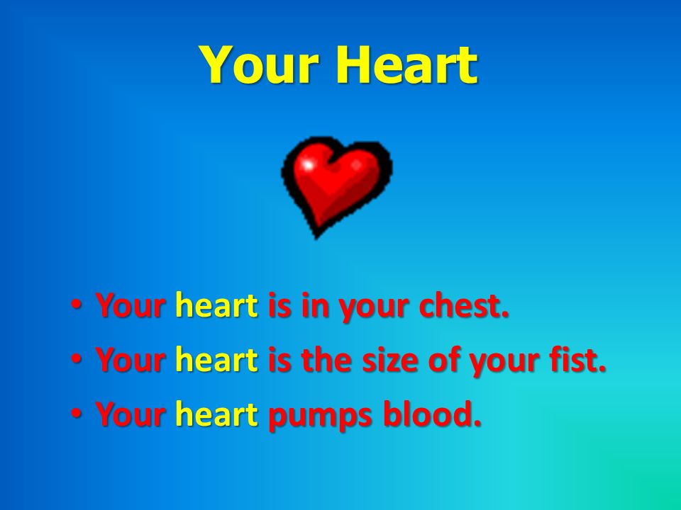 Your Heart Your heart is in your chest.Your heart is in your chest. Your heart is the size of your fist.Your heart is the size of your fist. Your hear