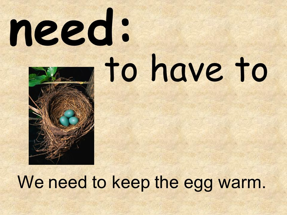 need: to have to We need to keep the egg warm.