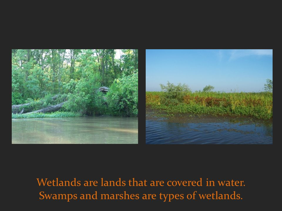 Wetlands are lands that are covered in water. Swamps and marshes are types of wetlands.