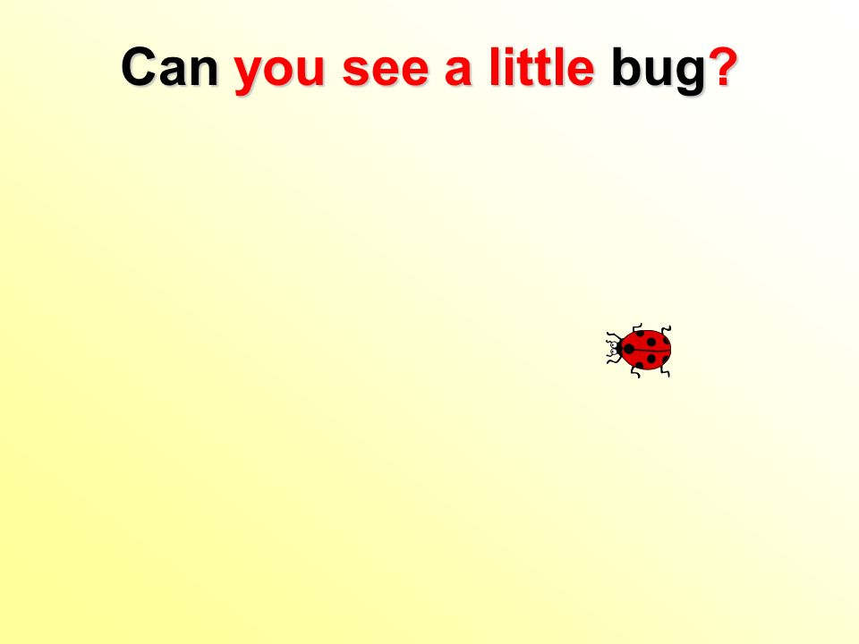Can you see a little bug?
