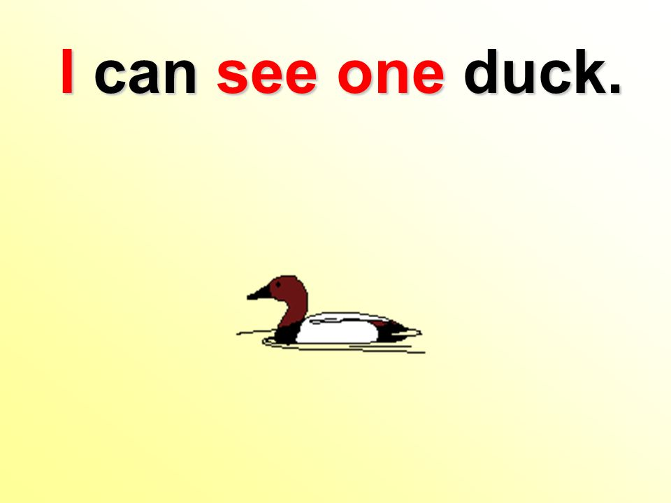 I can see one duck.