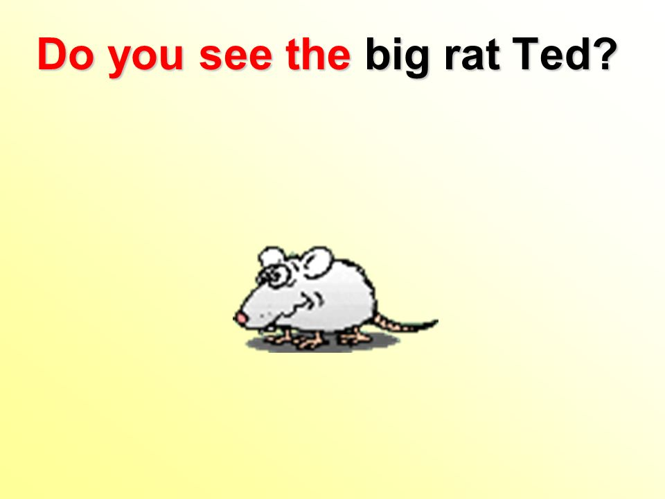 Do you see the big rat Ted?