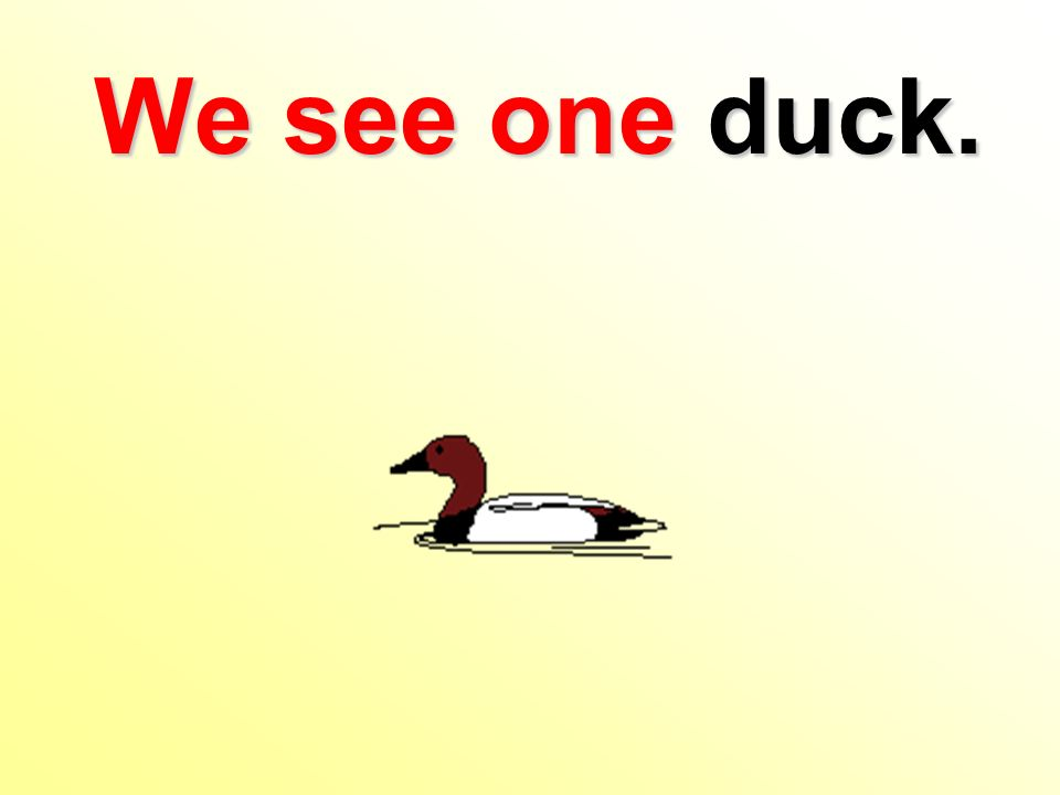 We see one duck.