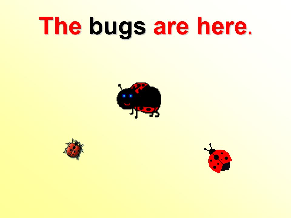 The bugs are here.