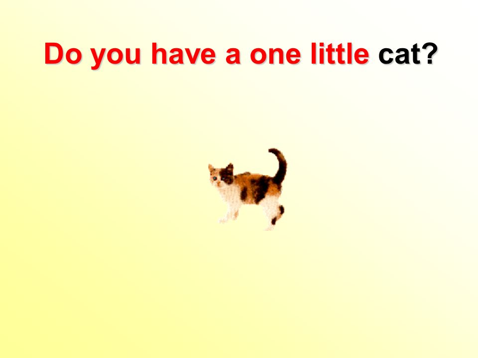 Do you have a one little cat?