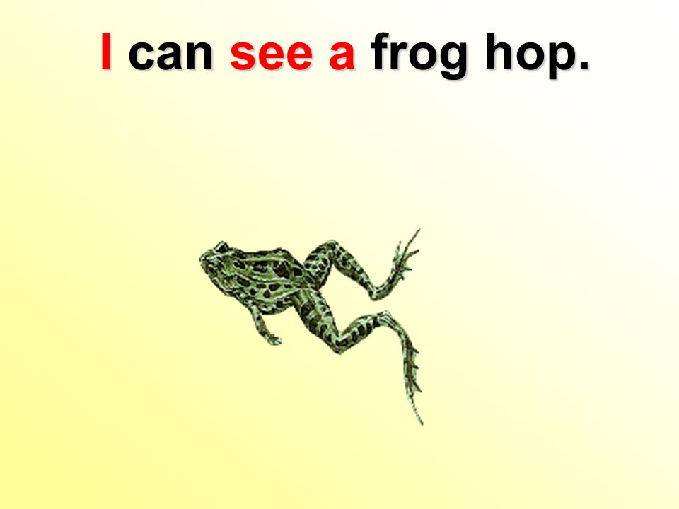 I can see afrog hop. I can see a frog hop.