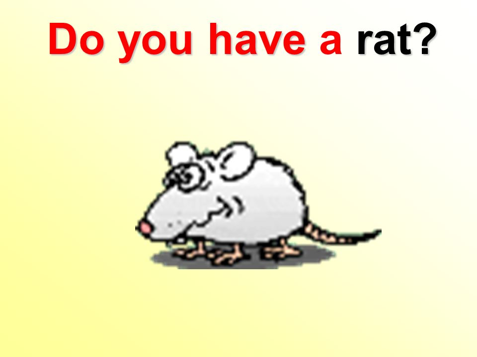 Do you have rat? Do you have a rat?