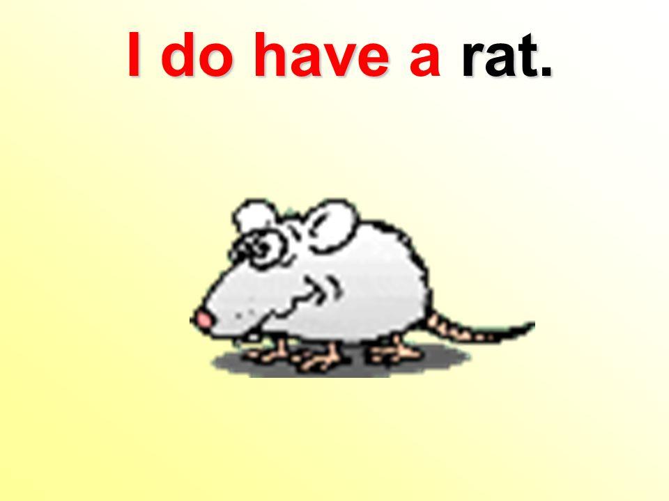 I do have rat. I do have a rat.