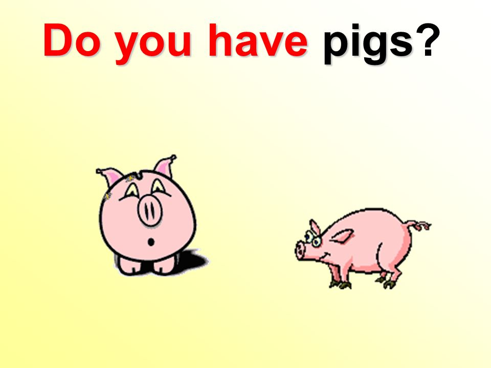 Do you have pigs Do you have pigs?
