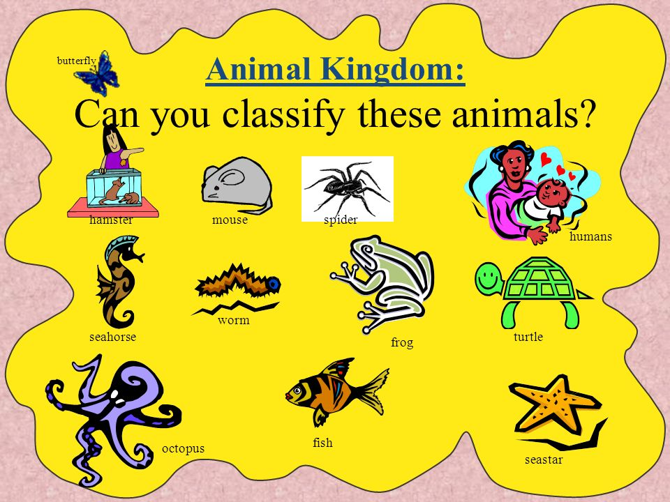 Animal Kingdom Animals are classified into the Animal Kingdom. Animals are consumers. (They must eat food to live.) Animals can be grouped as Inverteb