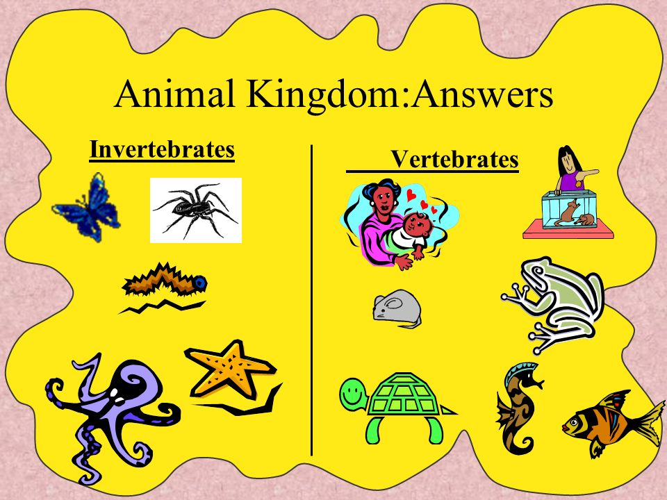 Animal Kingdom: Can you classify these animals? butterfly hamstermousespider humans seahorse worm frog turtle octopus fish seastar