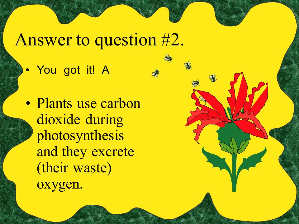 Question #2: Which gas is used by plants during photosynthesis?- A carbon dioxide B oxygen C nitrogen D phosphorus