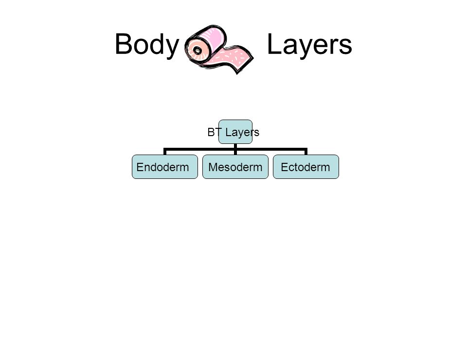 Body Layers BT Layers EndodermMesodermEctoderm