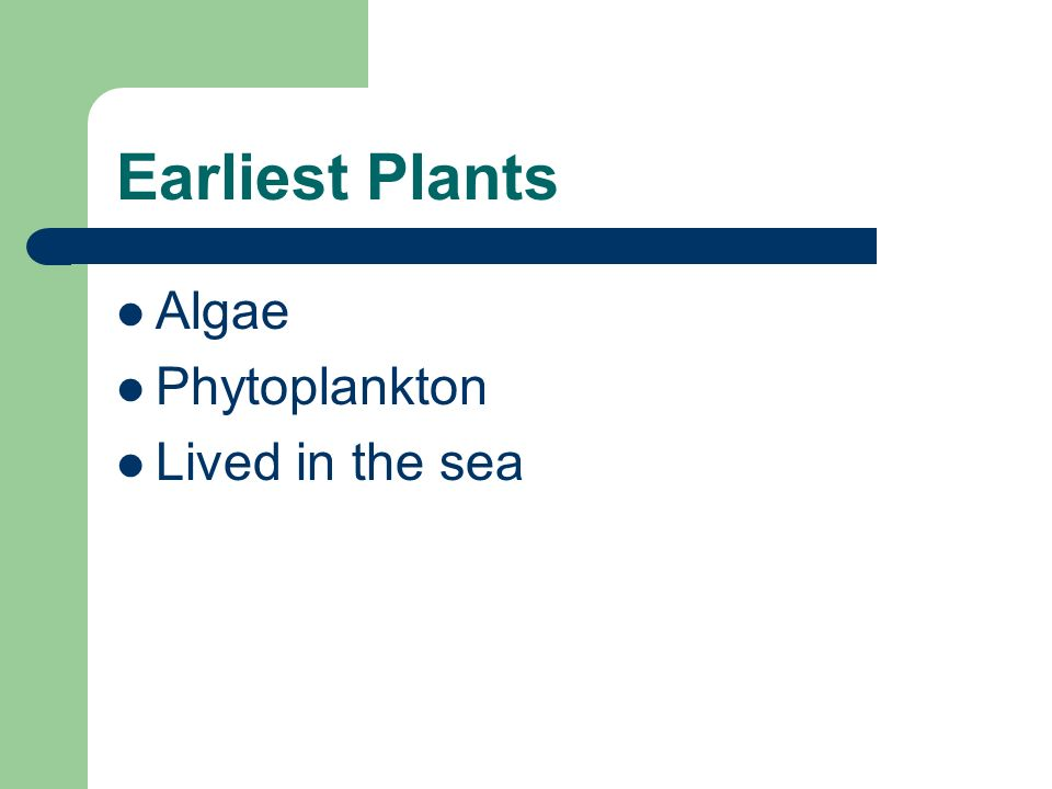 Earliest Plants Algae Phytoplankton Lived in the sea