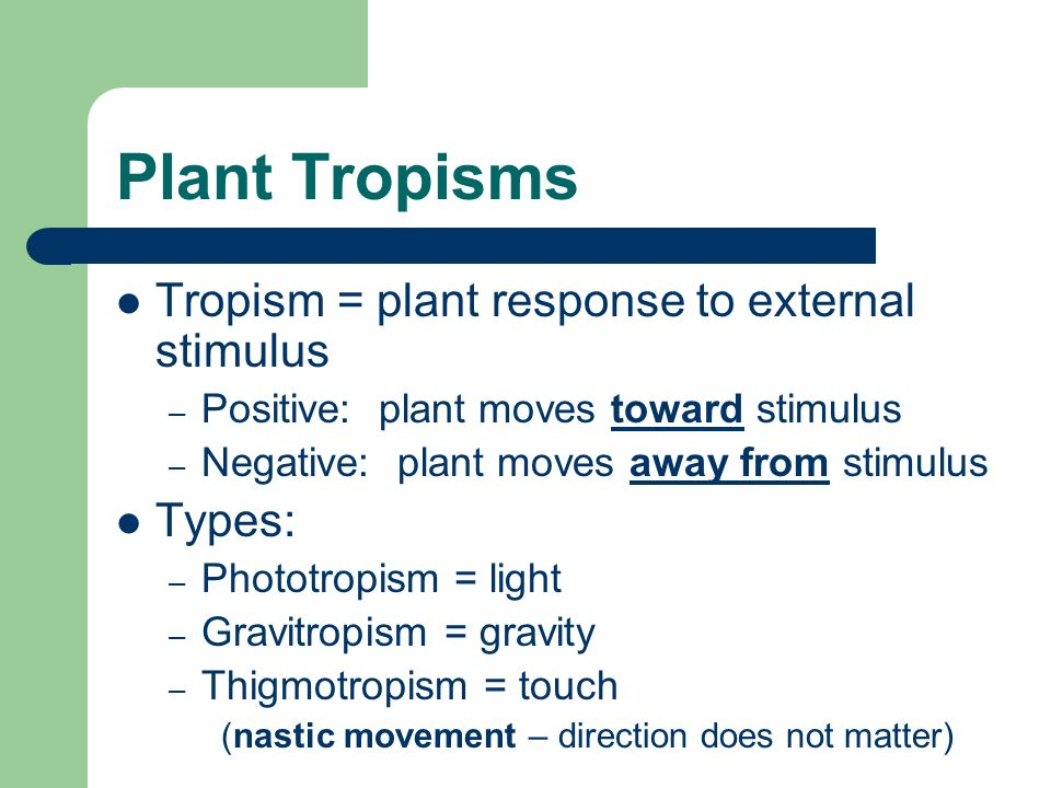 Plant Tropisms Tropism = plant response to external stimulus – Positive: plant moves toward stimulus – Negative: plant moves away from stimulus Types: