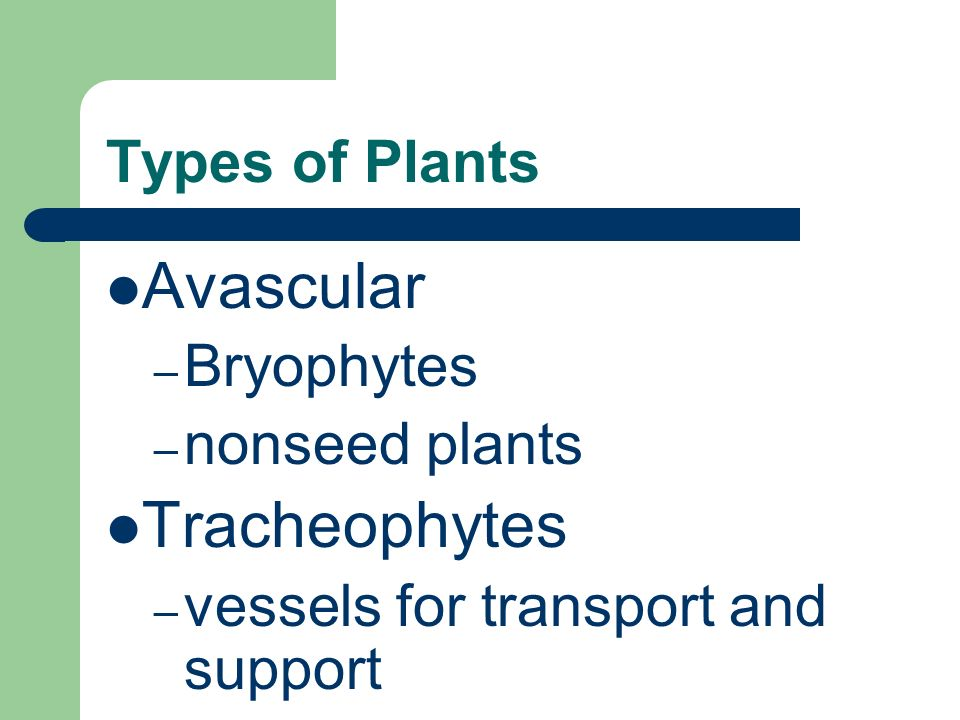 Types of Plants Avascular – Bryophytes – nonseed plants Tracheophytes – vessels for transport and support