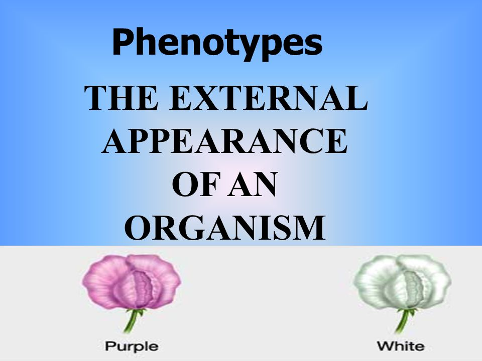 Phenotypes THE EXTERNAL APPEARANCE OF AN ORGANISM