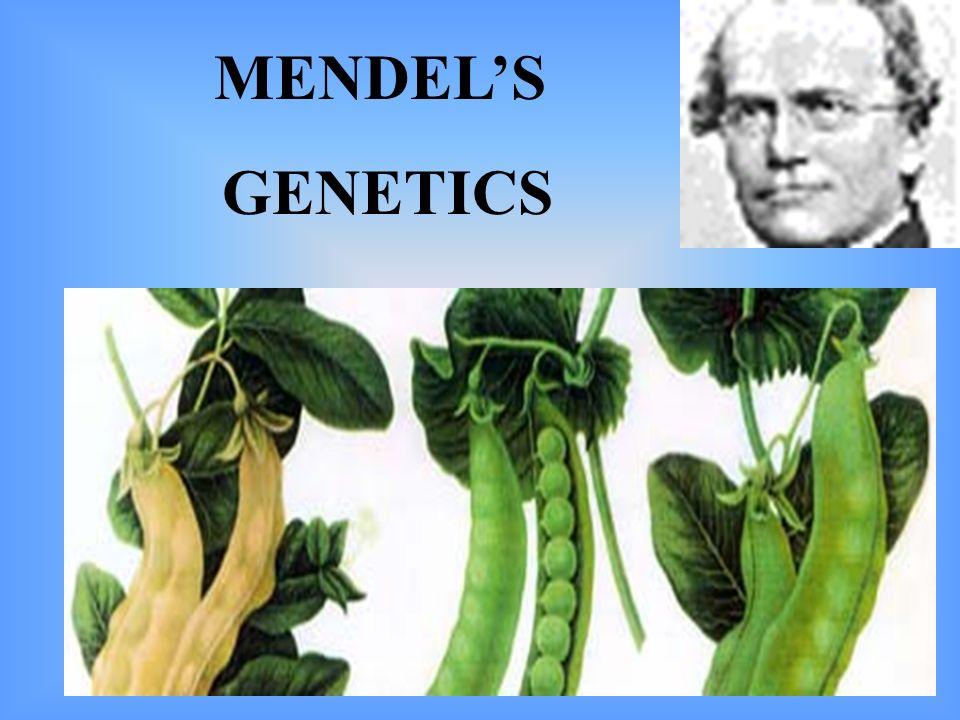 MENDELS GENETICS