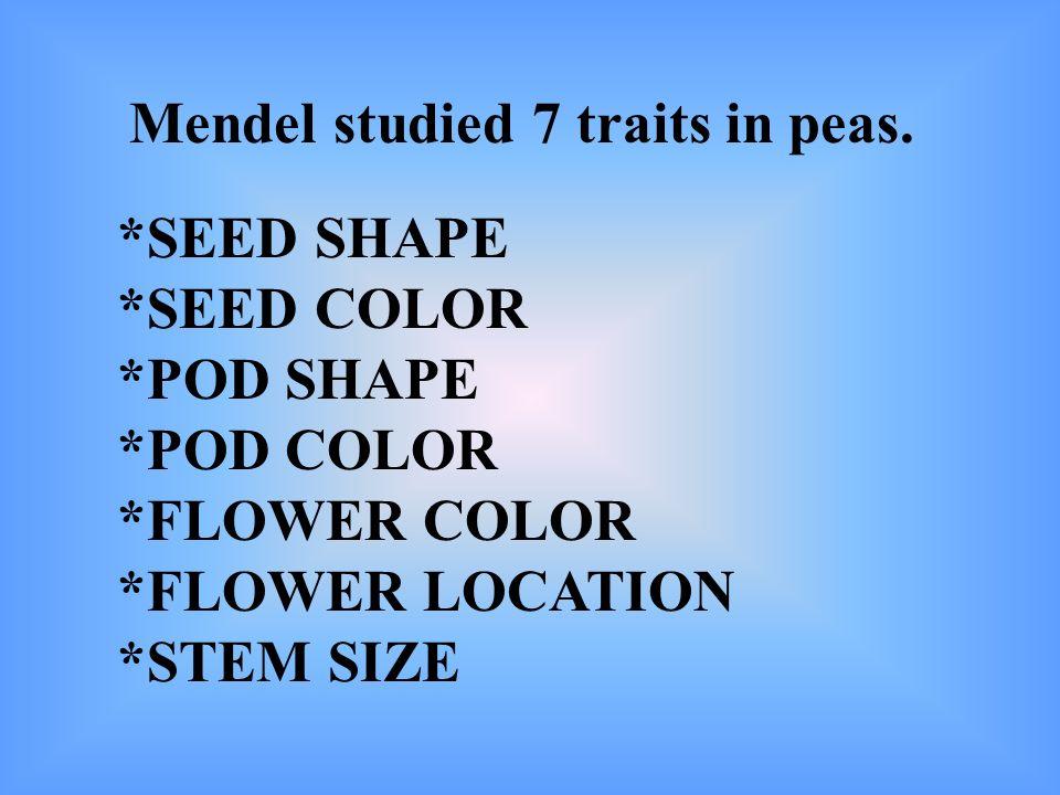 Mendel studied 7 traits in peas. *SEED SHAPE *SEED COLOR *POD SHAPE *POD COLOR *FLOWER COLOR *FLOWER LOCATION *STEM SIZE