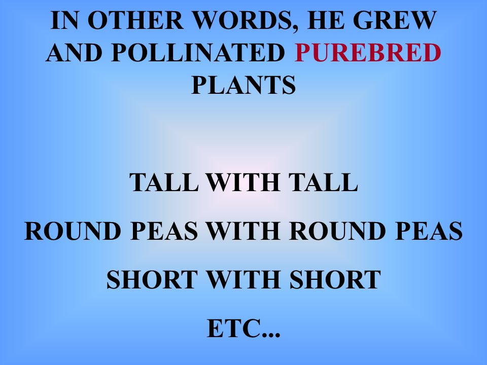 IN OTHER WORDS, HE GREW AND POLLINATED PUREBRED PLANTS TALL WITH TALL ROUND PEAS WITH ROUND PEAS SHORT WITH SHORT ETC...
