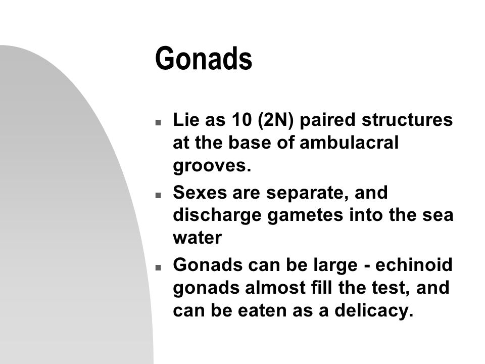 Gonads n Lie as 10 (2N) paired structures at the base of ambulacral grooves. n Sexes are separate, and discharge gametes into the sea water n Gonads c