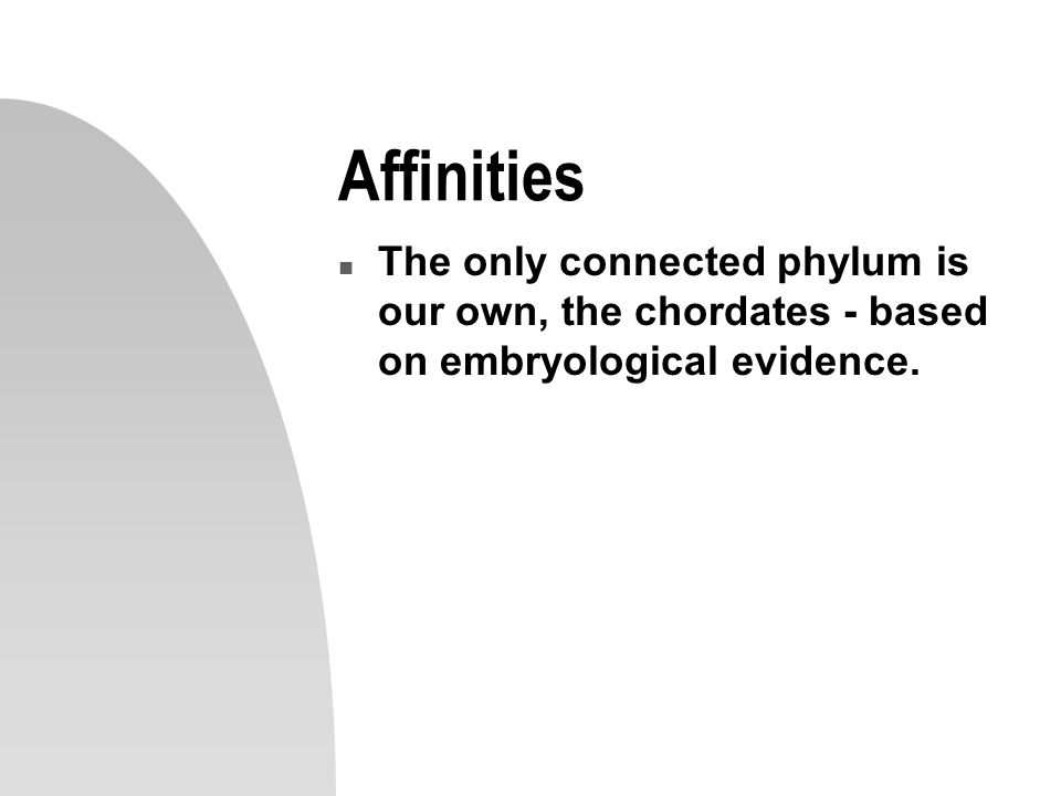 Affinities n The only connected phylum is our own, the chordates - based on embryological evidence.