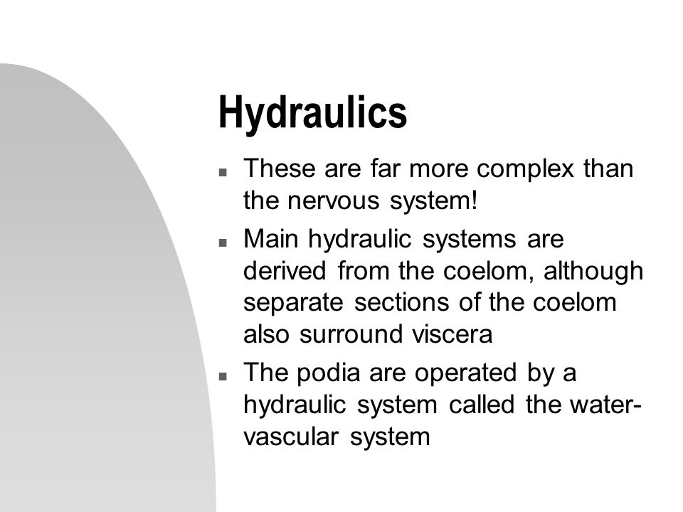 Hydraulics n These are far more complex than the nervous system! n Main hydraulic systems are derived from the coelom, although separate sections of t