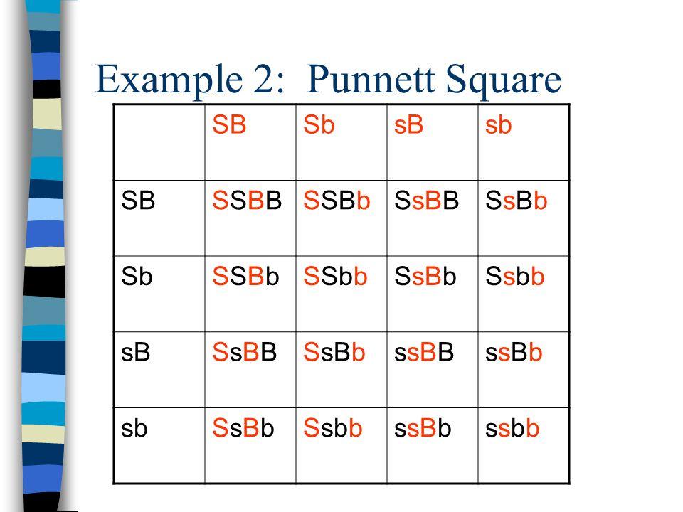Example 2: Punnett Square SBSbsBsb SBSSBBSSBBSSBbSsBBSsBbSsBb SbSSBbSSBbSSbbSsBbSsbbSsbb sBSsBBSsBBSsBbssBBssBbssBb sbSsBbSsBbSsbbssBbssbbssbb