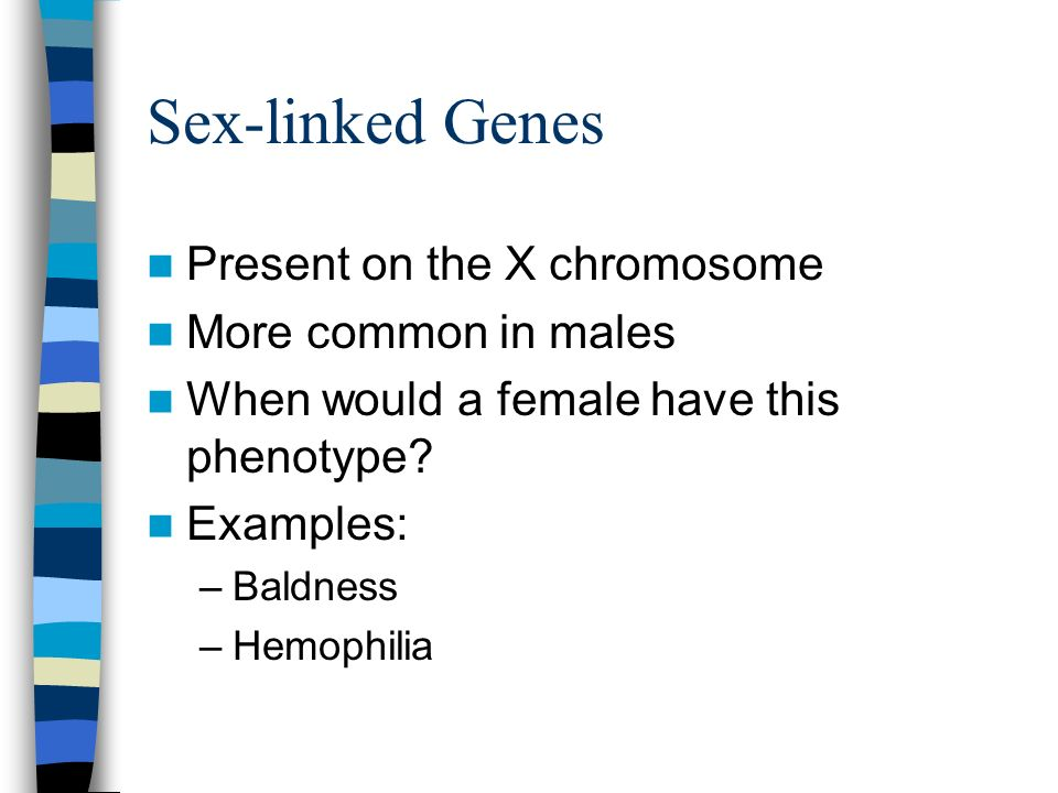 Sex-linked Genes Present on the X chromosome More common in males When would a female have this phenotype? Examples: –Baldness –Hemophilia
