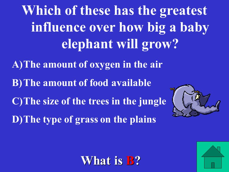 What is chloroplast? A plants green color is due to the presence of which organelle?