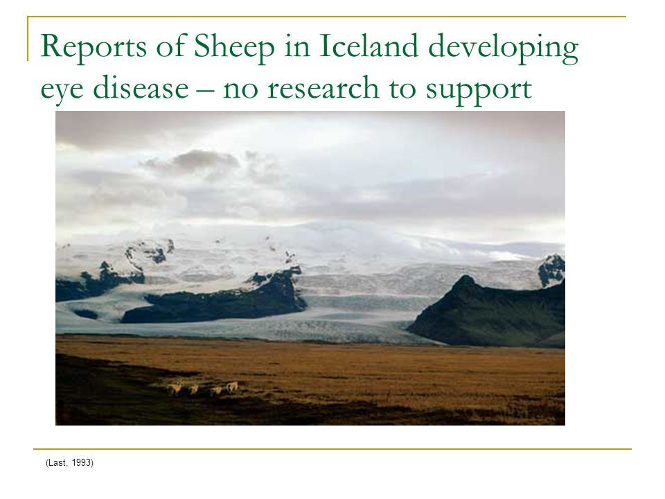 Reports of Sheep in Iceland developing eye disease – no research to support (Last, 1993)