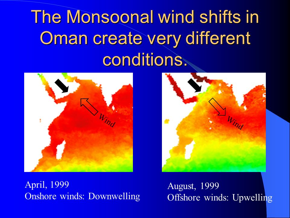 The Monsoonal wind shifts in Oman create very different conditions. August, 1999 Offshore winds: Upwelling April, 1999 Onshore winds: Downwelling Wind