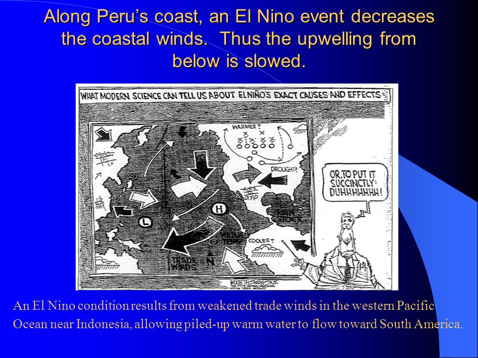 Along Perus coast, an El Nino event decreases the coastal winds. Thus the upwelling from below is slowed. An El Nino condition results from weakened t
