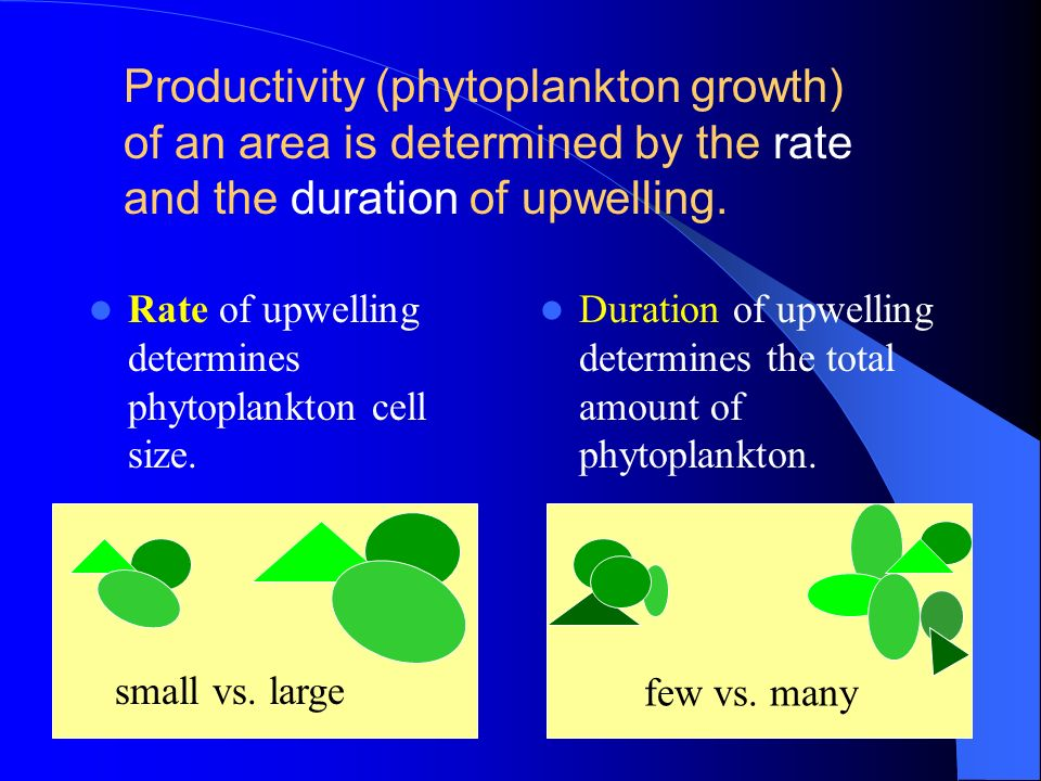 Productivity (phytoplankton growth) of an area is determined by the rate and the duration of upwelling. Rate of upwelling determines phytoplankton cel