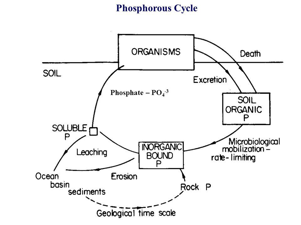 20 Phosphorous Cycle Phosphate – PO 4 -3