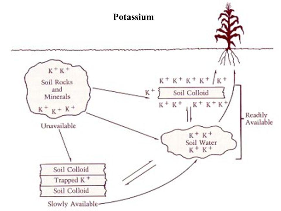 22 Potassium