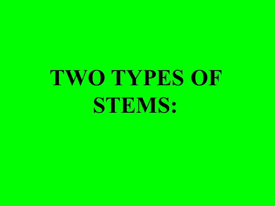 TWO TYPES OF STEMS: