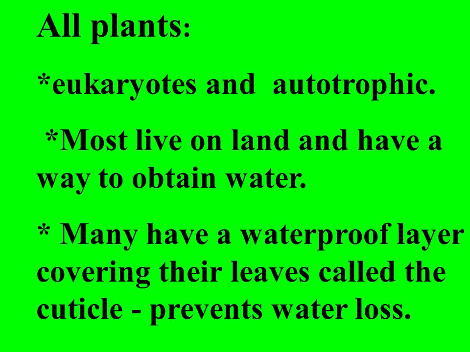 All plants : *eukaryotes and autotrophic. *Most live on land and have a way to obtain water. * Many have a waterproof layer covering their leaves call