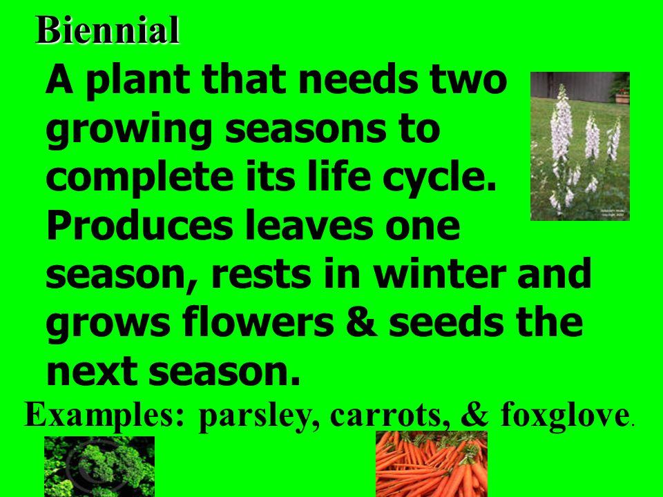 Biennial A plant that needs two growing seasons to complete its life cycle. Produces leaves one season, rests in winter and grows flowers & seeds the