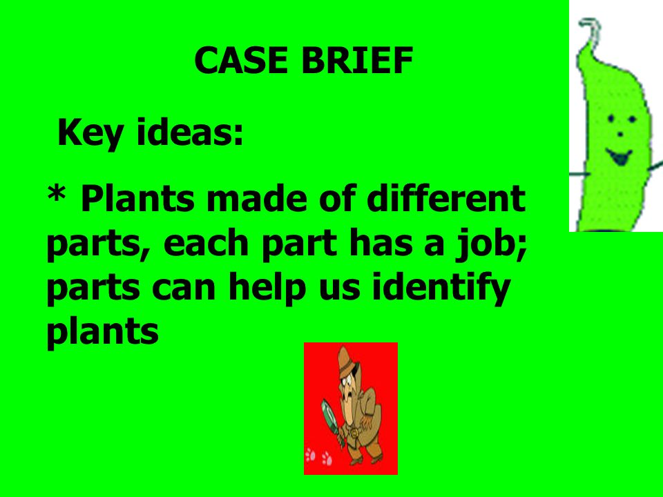 CASE BRIEF Key ideas: * Plants made of different parts, each part has a job; parts can help us identify plants