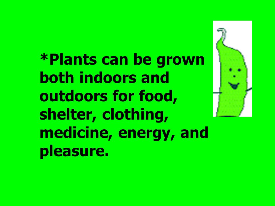 *Plants can be grown both indoors and outdoors for food, shelter, clothing, medicine, energy, and pleasure.