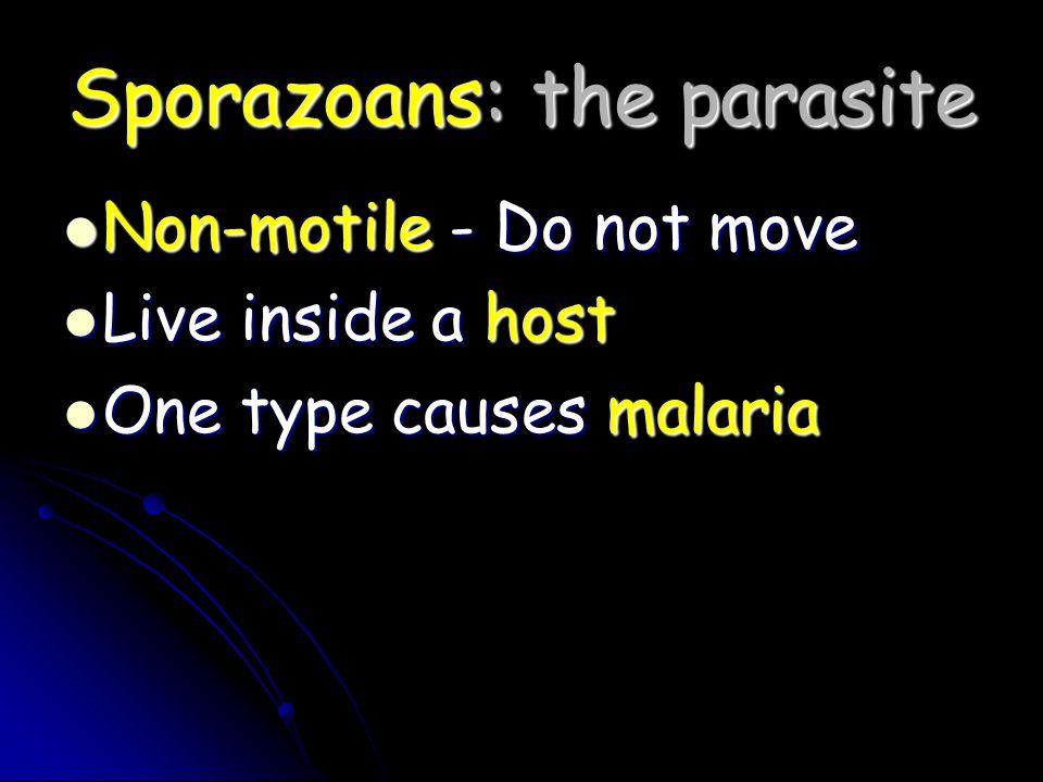 Sporazoans: the parasite Non-motile - Do not move Non-motile - Do not move Live inside a host Live inside a host One type causes malaria One type caus