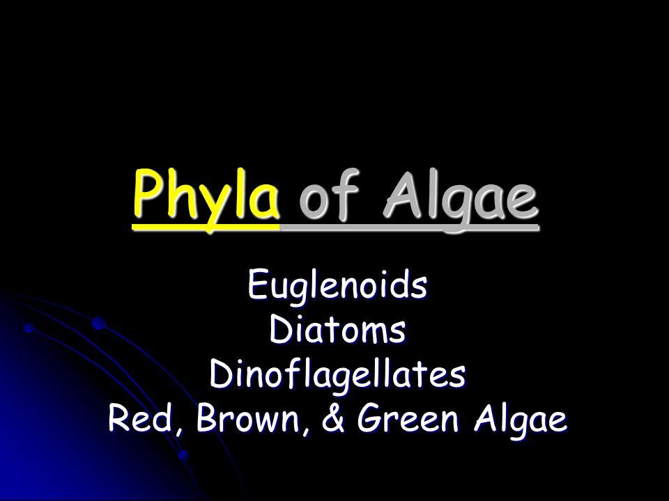 Phyla of Algae EuglenoidsDiatomsDinoflagellates Red, Brown, & Green Algae